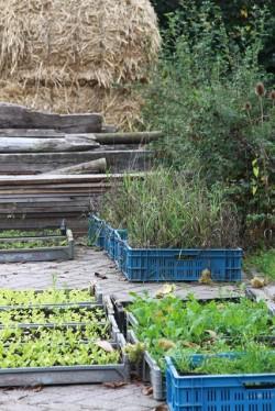 stekjes boerderijg