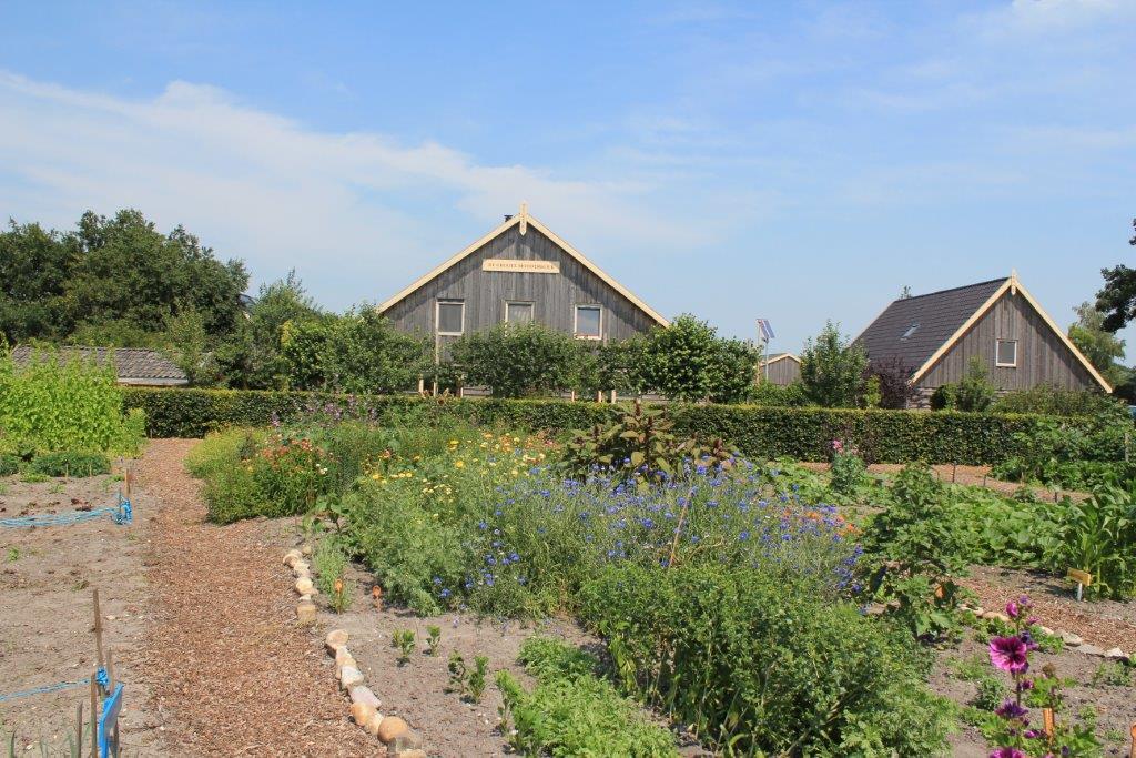 tuin in juli 2011 (16)